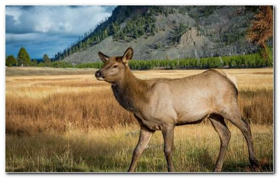 Image National Park Wilderness Elk Building Grassland