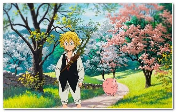 Image Nature Blossom Anime Spring Flora
