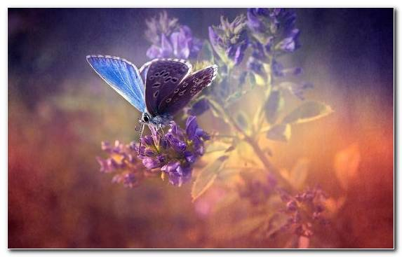 Image Nature Butterfly Flower Insect Purple