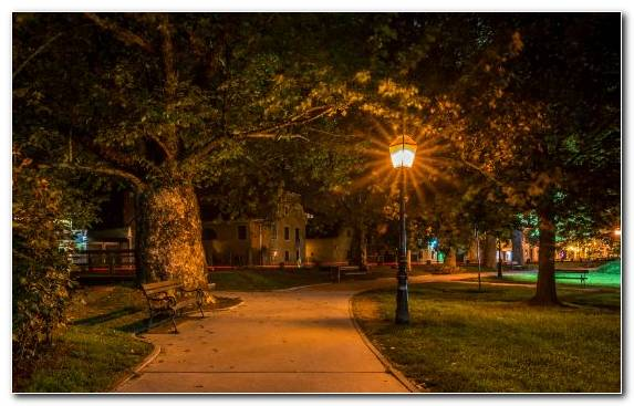 Image Nature Lighting Night Tree Street Light