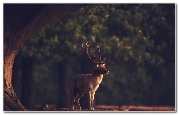 Image Nature Music Darkness Artist Deer