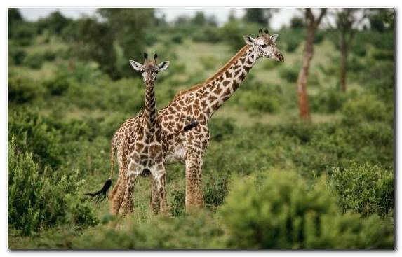 Image Nature Reserve Animal Wildlife Grazing Terrestrial Animal