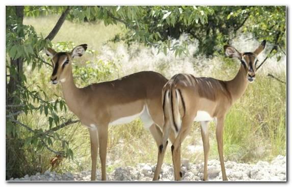 Image Nature Reserve Deer Kudu Antelope Impala
