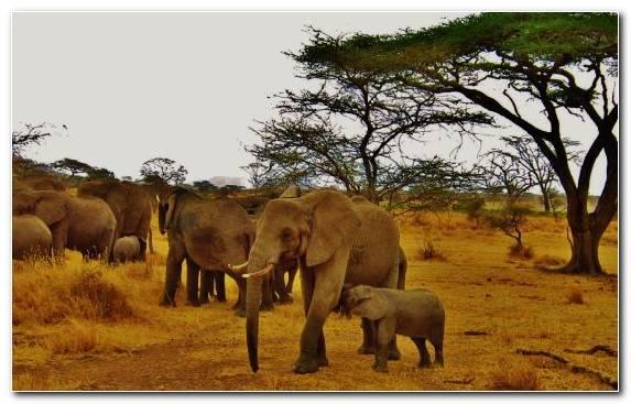 Image Nature Reserve Desert Travel Savanna Indian Elephant