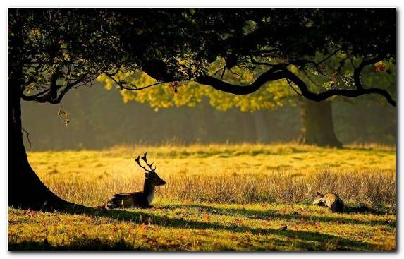 Image Nature Reserve Grasses Deer Reindeer Grazing