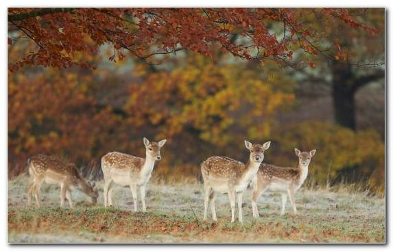 Image Nature Reserve Leaf White Tailed Deer Terrestrial Animal Wildlife