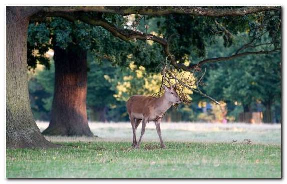Image Nature Reserve Nature Red Deer White Tailed Deer Tree