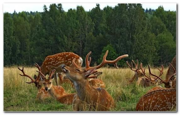 Image Nature Reserve Reindeer Antler Terrestrial Animal Grass