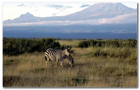Image Nature Reserve Safari Wildlife Ecosystem National Park