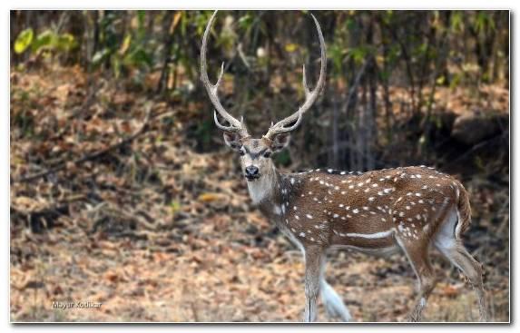 Image Nature Wilderness Desert Deer Terrestrial Animal