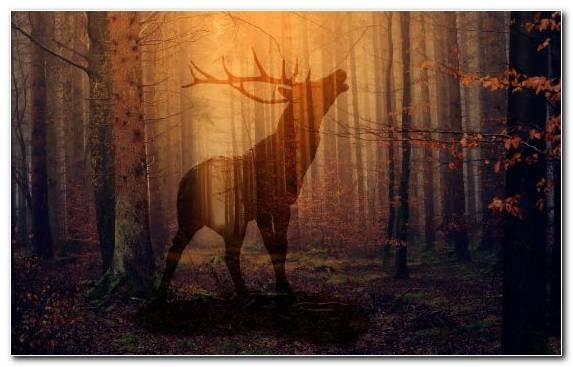 Image Nature Wood Darkness Woodland Deer