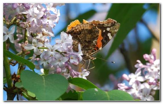 Image nectar brush footed butterfly moths and butterflies insect invertebrate