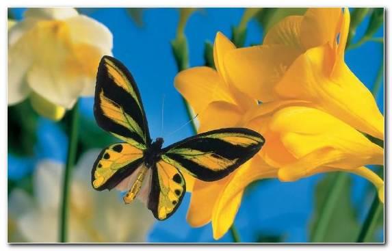 Image Nectar Flower Autumn Moths And Butterflies Wildflower