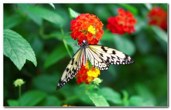Image Nectar Flower Monarch Butterfly Insect Invertebrate