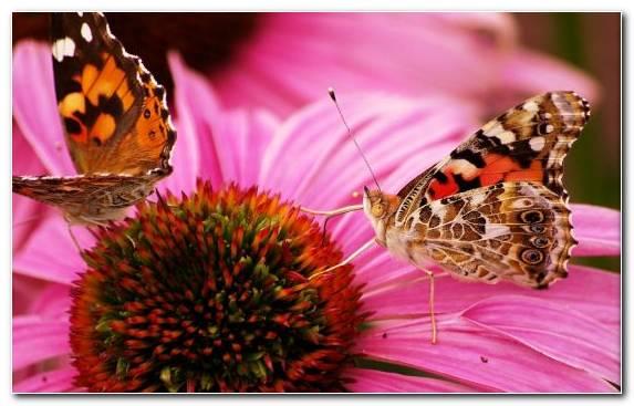 Image Nectar Petal Pollinator Pollen Flower