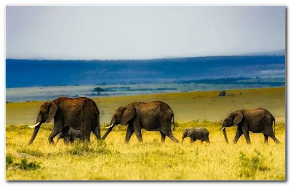 Image Ngorongoro Conservation Area Lake Manyara Elephant Human Wildlife