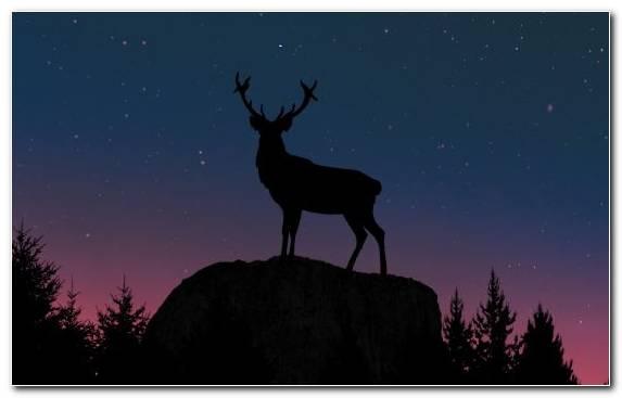 Image night deer tree nature star
