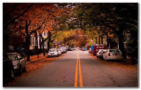 Image Night New York City Leaf Autumn City