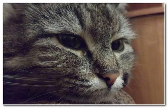Image Nose Fauna Cat Snout Mammal