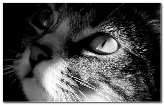 Image Nose Moustache Black And White Black Whiskers