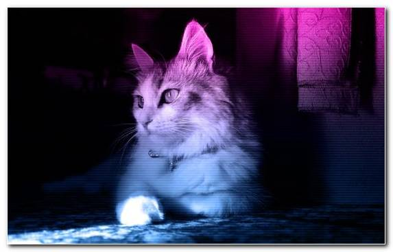 Image Nyan Cat Cat Eye Neon Vertebrate