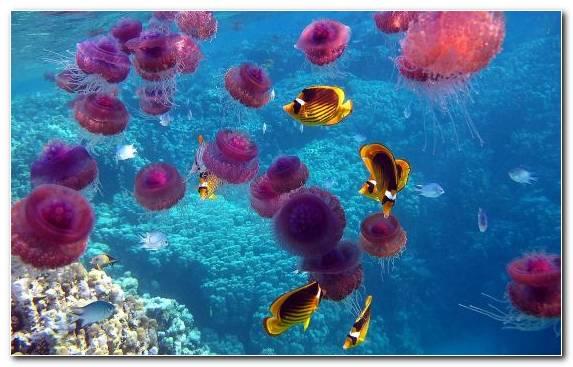 Image Ocean Coral Reef Fish Stony Coral Aquatic Animal Pomacentridae