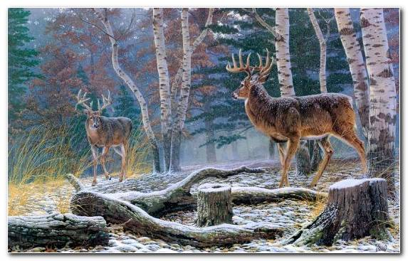 Image Oil Paint Deer Creative Arts Tree Wolf