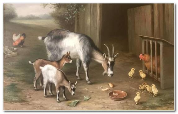 Image Oil Paint Goat Canvas Herd Horn