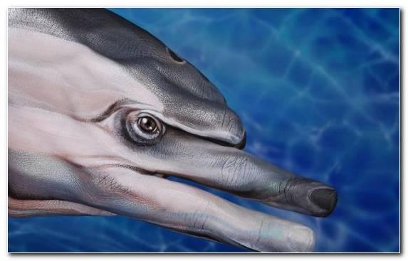 Image Oil Painting Portrait Painting Brera Marine Biology