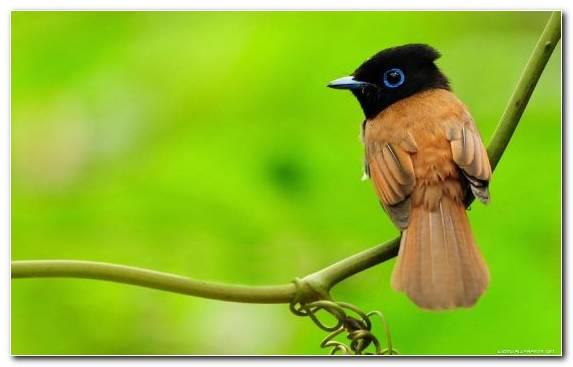 Image old world flycatcher beak nightingale wing coraciiformes