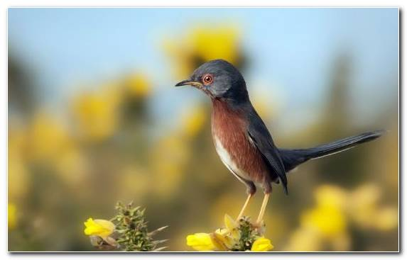 Image Old World Flycatcher Cygnini Nightingale Wren Beak