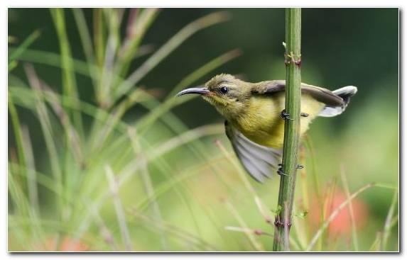 Image old world flycatcher ecosystem wildlife nightingale bird