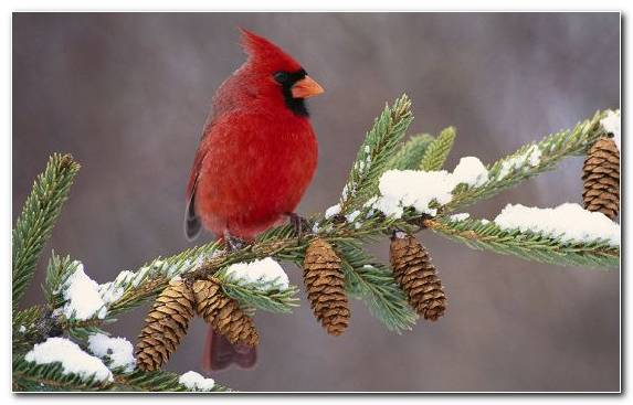 Image Old World Flycatcher Holiday Tree Bird Beak