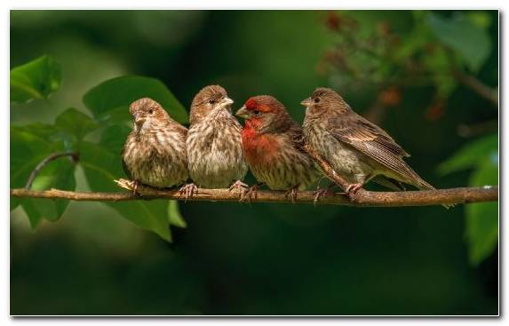 Image Old World Flycatcher Sparrow Common Chaffinch Beak Perching Bird