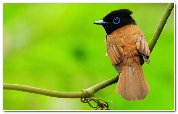 Image Old World Flycatcher Wing Bird Nightingale Beak