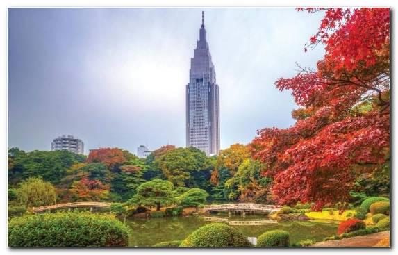 Image Pagoda Tree Autumn Park Landmark