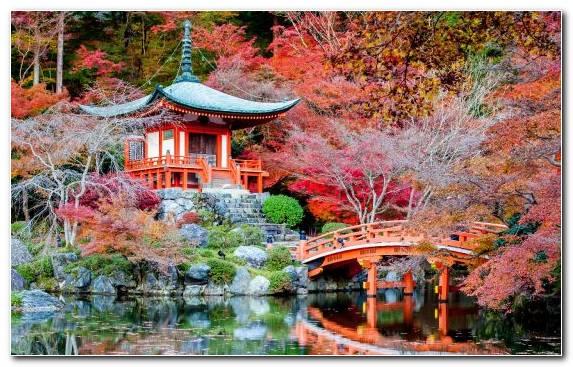 Image Pagoda Tree Leaf Japanese Garden Maple Tree