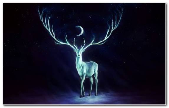 Image Painter Music Fantasy Deer Atmosphere