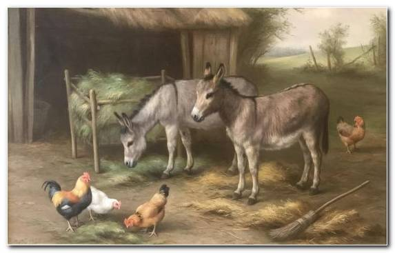 Image Painter Wildlife Pack Animal United Kingdom Donkey