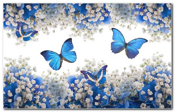 Image Painting Brush Footed Butterfly Pollinator Blue Invertebrate