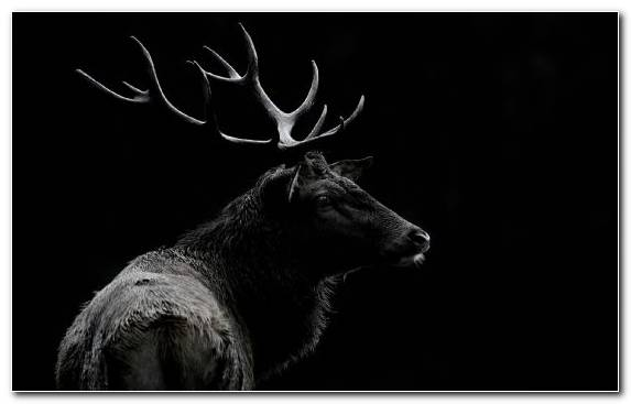Image Painting Monochrome Mode Antler Reindeer Artist