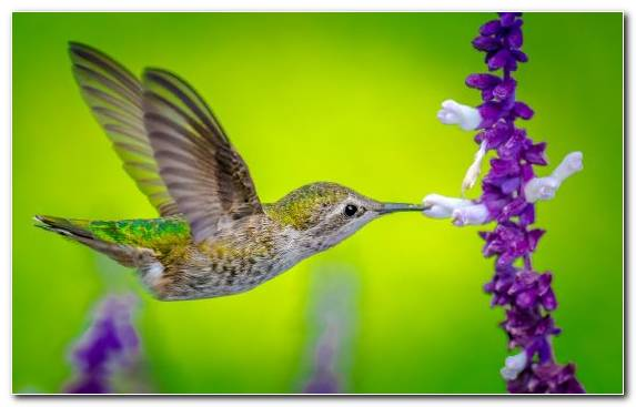 Image Painting Nectar Wildlife Bird Do It Yourself