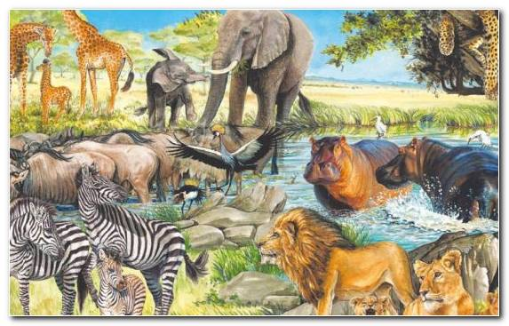 Image Painting Puzzle Terrestrial Animal Wildlife Nature Reserve