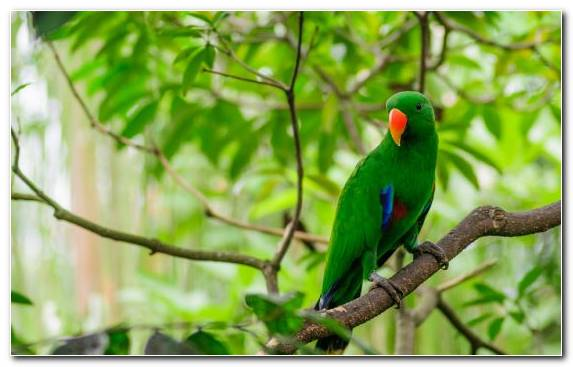 Image Parakeet Beak Wildlife Fauna Green