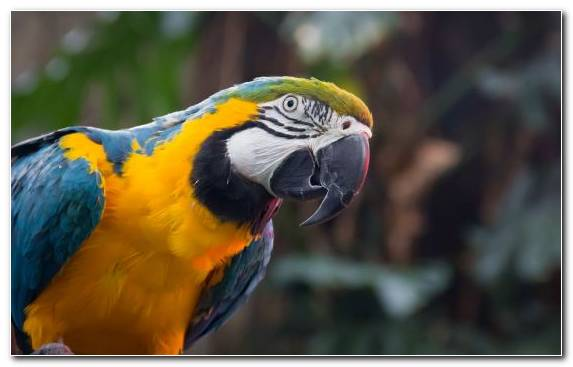 Image Parakeet Bird Parrot Perico Beak