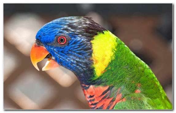 Image Parakeet Lorikeet Television Feather Bird