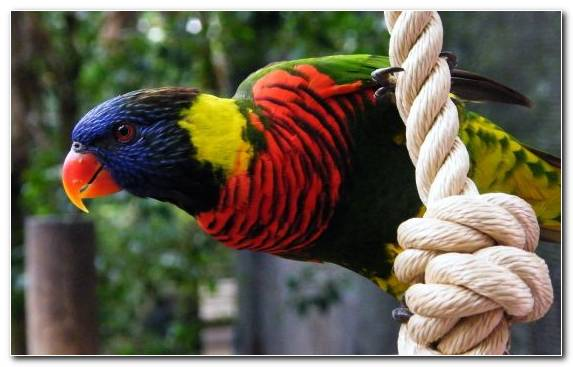 Image Parakeet Parrot Lovebird Macaw Budgerigar