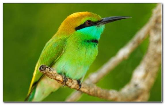 Image Parrot Beak Wing Wildlife Coraciiformes