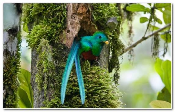 Image Parrot Bird Ecosystem Beak Parakeet