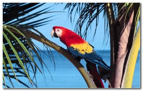 Image Parrot Bird Parakeet Scarlet Macaw Beak